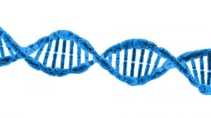 dna and your insurance policy - seeman holtz