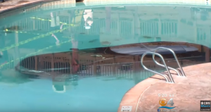 car plummets into swimming pool - seeman holtz